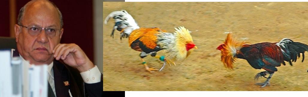 De acordo com o Ministério Público Federal, Samuel Franco Dalia Junior, além de advogado com atuação na cúpula da OAB-MT, juiz eleitoral no TRE-MT, é um criminoso ambiental, responsável pela continuada tortura e morte de galos em rinhas de briga que ele estaria explorando em Mato Grosso, desafiando a legislação em vigor